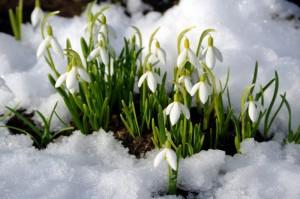 Весной хочется зелени! Обновления в интерфейсе